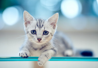 Portrait of a gray striped kitten
