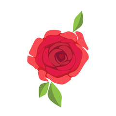 Image of beautiful red rose isolated on white background. Vector EPS10