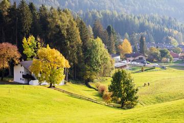 Green alpean meadow