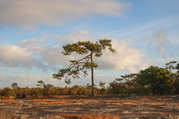 Tree in the forest,nature,view,landscape,sky,cloud,stone