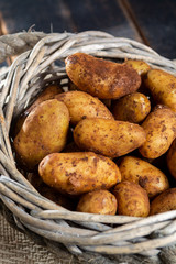 New harvest potatoes not washed with soil on table