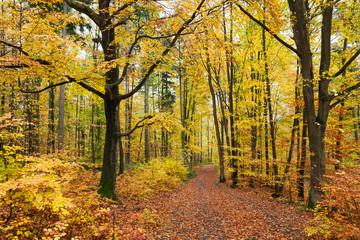 Germany, Rhineland-Palatinate, Palatinate Forest Nature Park in autumn