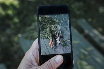 Hand taking smartphone picture of vegetables lying on garden table