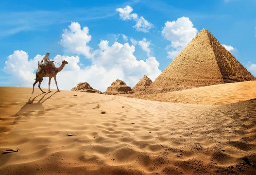 Camel near pyramids