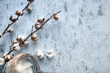 Branch of white soft cotton flowers lying near wicker basket on a wooden background with copy space. Top view