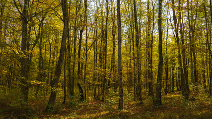 Dense forest in the autumn