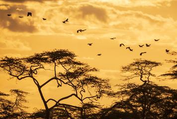 flying birds in back light