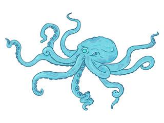 Vector Single Cartoon Illustration - Turquoise Octopus. Wild Underwater Animal.