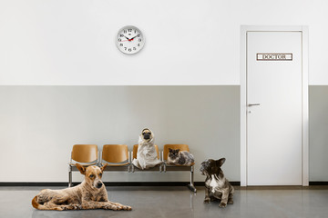 veterinary waiting room with chairs, clock, close door and group of sitting animals
