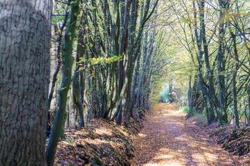 Tree avenue in autumn