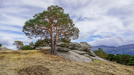 evergreen forest landscape of the Iberian Peninsula