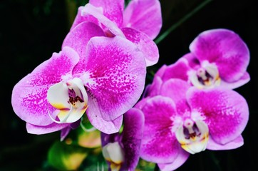 Purple orchid in the forest