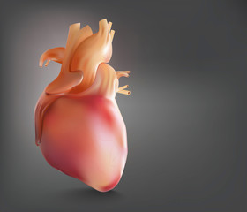 Human heart show powder is a 3D image.