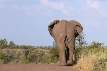 Beautiful Elephant wondering in national park