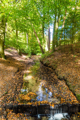 Lttle stream in a Dutch forest in National Park Posbank and  Veluwe in Gelderland, Netherlands