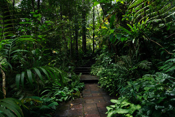 walkway in rain forest