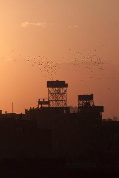 Bird Towers