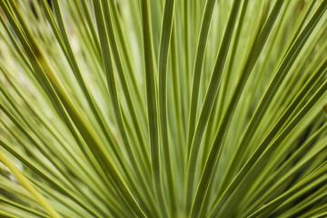 Green spiky textures