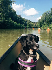 Black dog on a canoe in a hot summer day