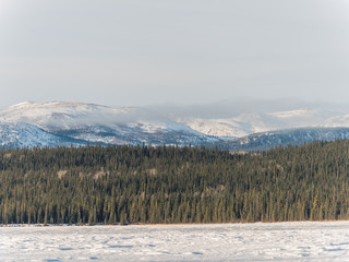 wintry landscape scenery with flat county and cypress forest