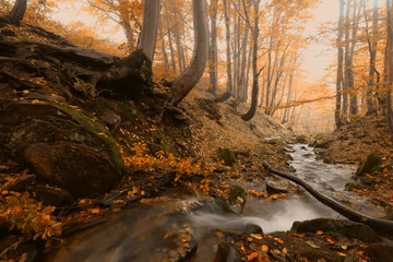 amazing autumn sunrise scene in the forest, golden picturesque morning dawn sunlight imnage, river streamn in autumn forest, landscape nature colorful background, Ukraine, Europe mountains