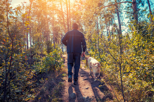 A man with Labrador retriever dog walking in the forest in autumn