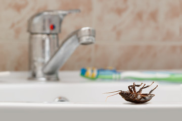 Dead cockroach on the sink on the background of the water faucet and brown tile in bathroom. Inside buildings. Fight with cockroaches in the apartment. Extermination.