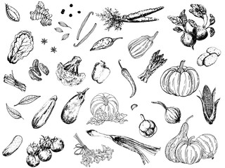 Big set of hand drawn sketch style vegetables isolated on white background. Vector illustration.