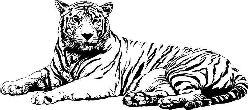 Reclining Tiger, contrast/shadow painting. SVG