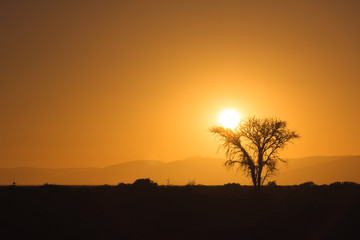 Sunrise behind a tree silhouette near Sossusvlei in the Namib Desert, Namibia.