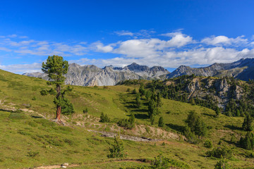 Rugged environment with conifer trees and gras hills in the Swiss National Park, Graubuenden, Switzerland.
