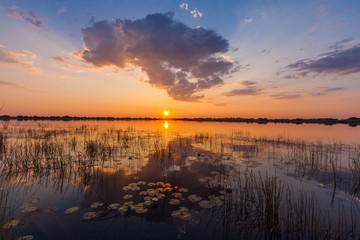 Sunset with waterlilies and clouds over the waters of the Okavango Delta, Botswana.
