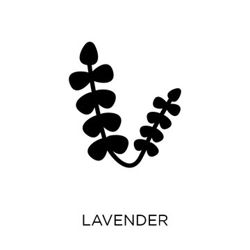 Lavender icon. Lavender symbol design from Nature collection.