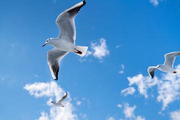 空を飛ぶカモメの写真 / 海鳥のイメージ