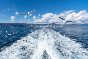 熱海の海から見た街並みとカモメ / 乗船中 / 観光地のイメージ