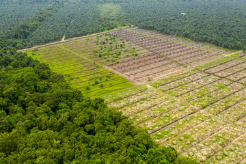 Aerial drone view of deforestation in a tropical rainforest to make way for palm oil plantations