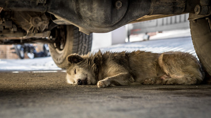 Dirty dog sleeping under the car