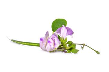 Violet flower on white background
