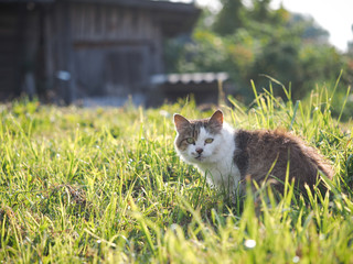Cat in the green grass. A portrait of the animal