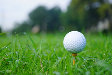 Golf ball and tee with gold course background ready to tee off
