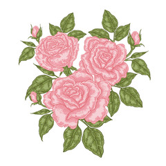 Bouquet of pink roses. Floral composition. Spring flowers isolated on white. Vintage vector illustration.