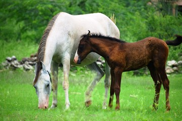 two wildlife horses
