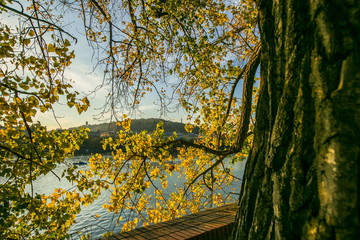 View of colorful autumn landscape, tree bark, yellow linden leaves, red brick fence, river Moldau, hill with lookout tower Petrin in distance, blue sky, sunny evening, seagulls, Prague, Czech Republic