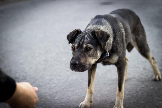 scared stray dog