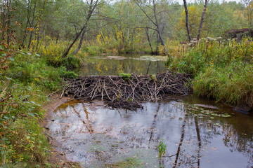 beaver dam on the white background