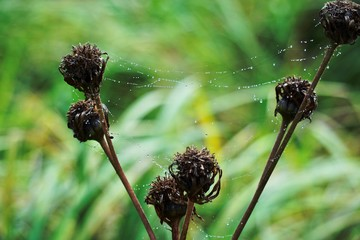 autumn jesień sieć pająk - fototapety na wymiar