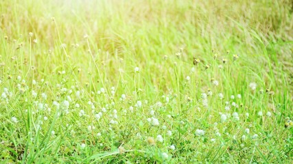 Wildflowers blossoming in the field