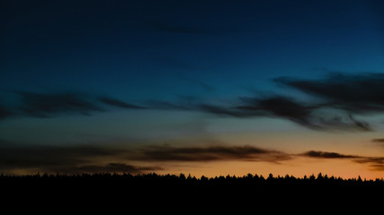 dark silhouette of a night pine forest on the sky background