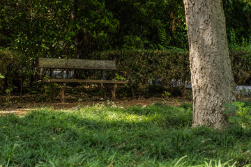 poor and old wooden bench in park under the green branches
