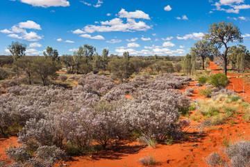 Scenic view of Central Australia desert, Northern Territory, Australia